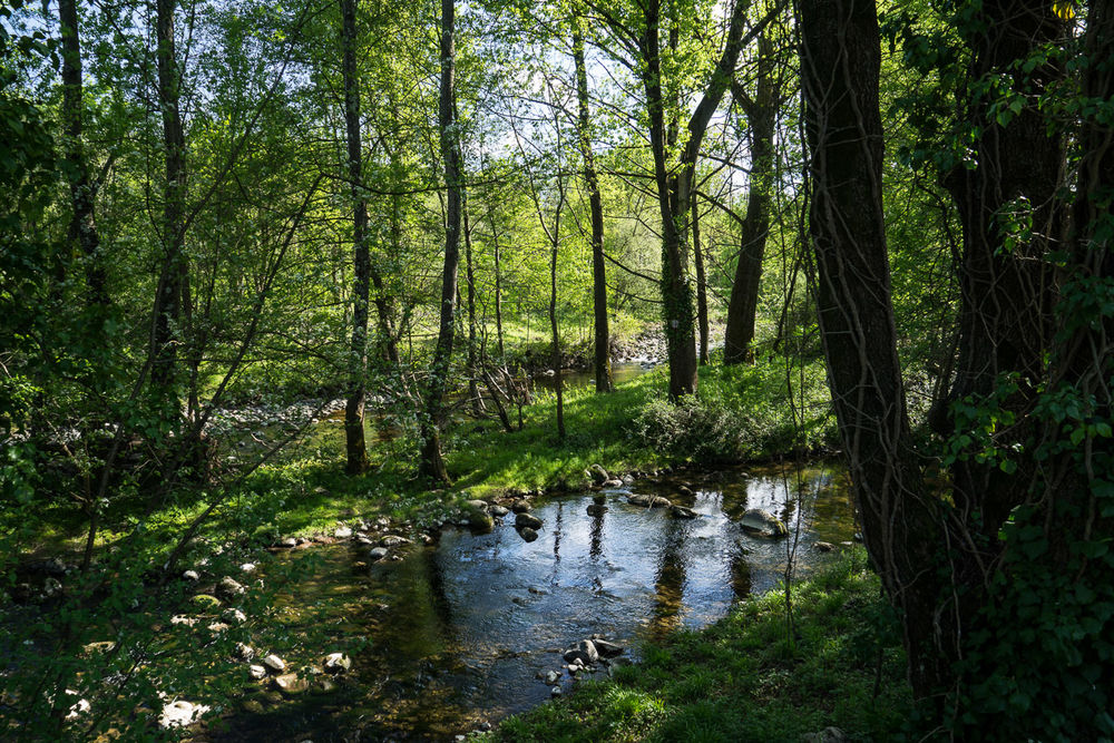 Saint-Lager Bressac, bois de Bressac et chemin des colporteurs