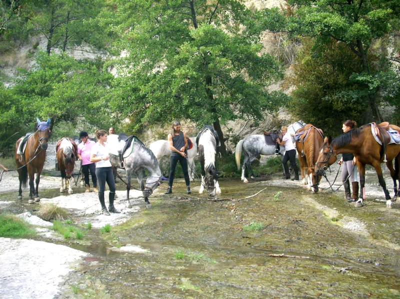 Alba Équitation promenade équestre