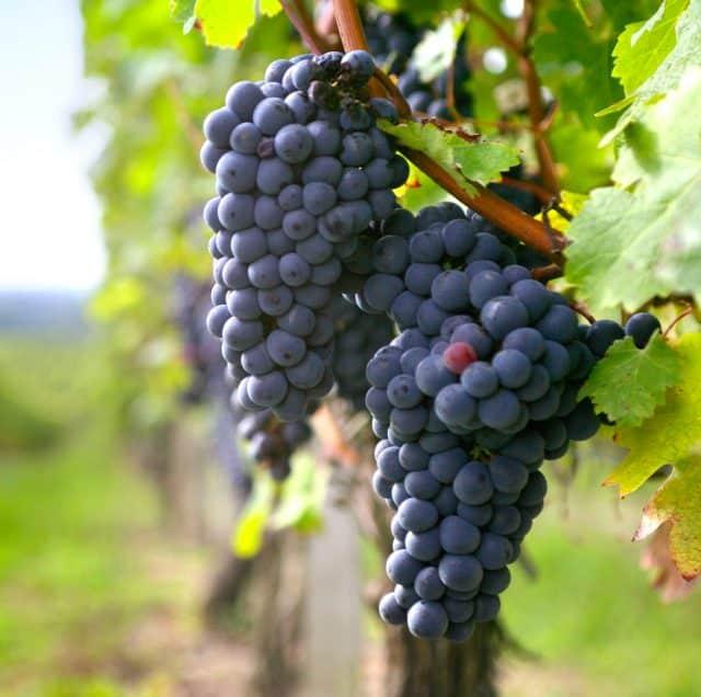 vins-ardeche-vallee-rhone