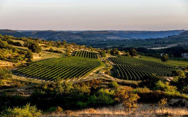 Alba-la-Romaine-vignes-collines