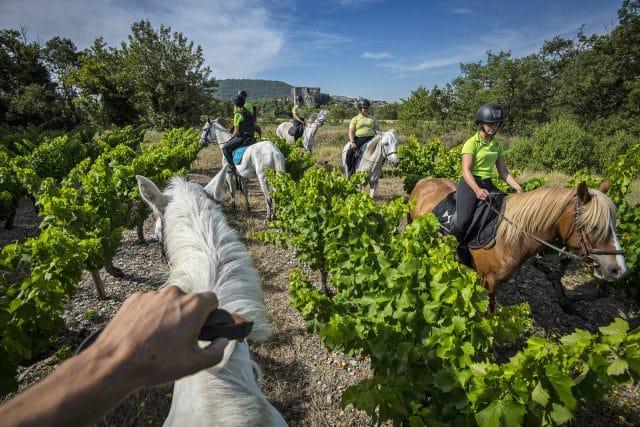 Alba-site-antique-chateau-cheval-equitation-vignes