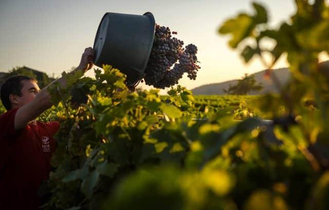 mas-intras-producteur-vin-ardeche-1